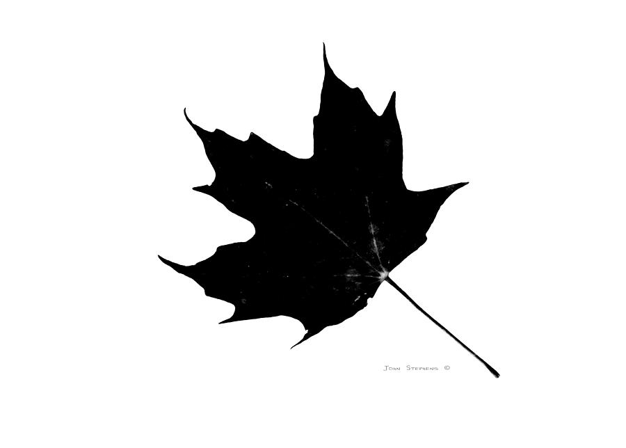 black-on-white-maple-leaf-john-stephens